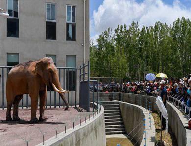 拉萨曲水动物园正式开园